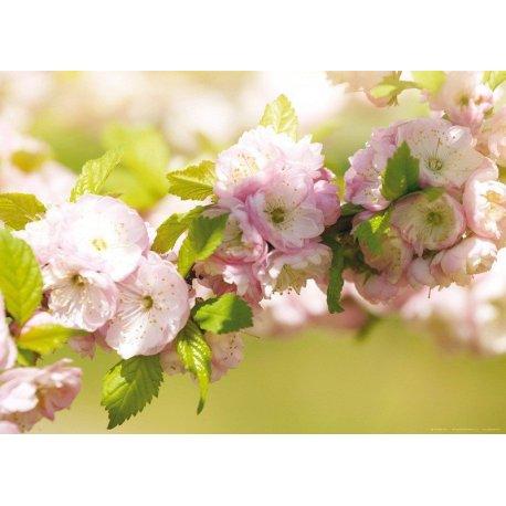 Primavera de Flores Lilás
