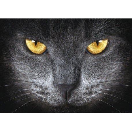 O Olhar do Gato Cinzento