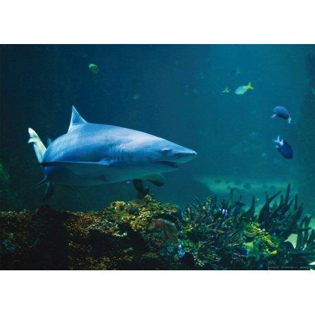 Tubarão nas Profundidades