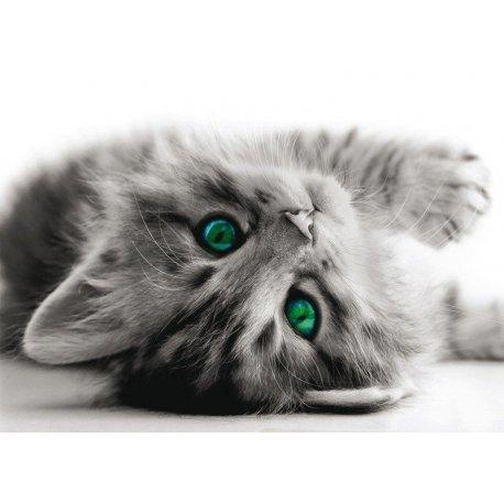 Pequeno Gato Brincalhão