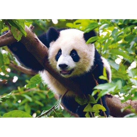 Urso Panda na Árvore