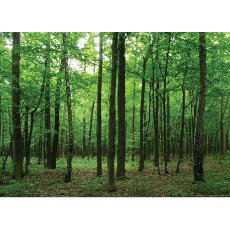 Caminhando pelo Bosque Verde