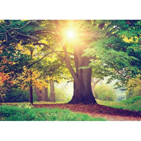 A Grande Árvore Iluminada