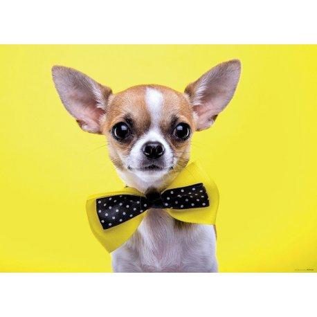 Chihuahua com Laço em Amarelo
