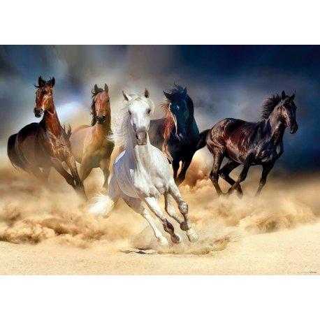 Cavalos Selvagens à Corrida