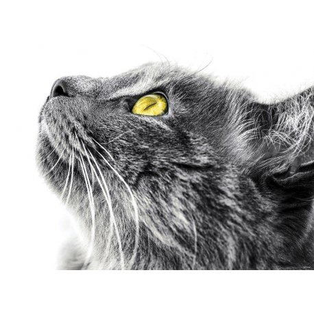 Perfil do Gato Curioso
