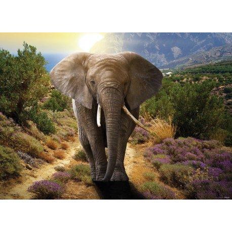 O Caminho do Elefante