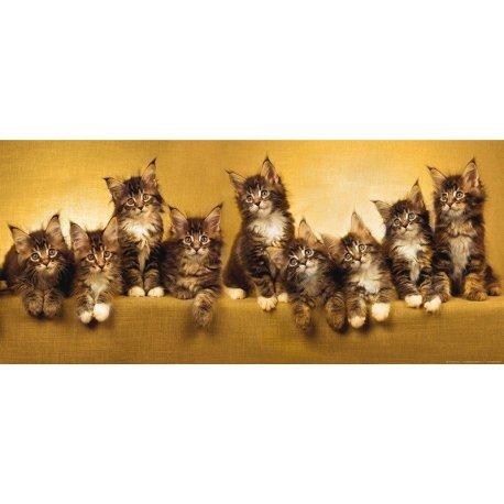 Doce Olhar de Pequenos Gatinhos