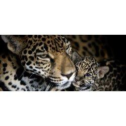 Mamã Leopardo junto ao Cachorro