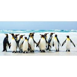 Pinguins Imperador sobre a Praia