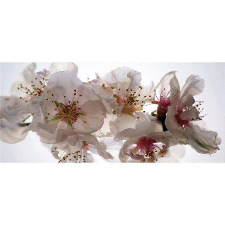 Detalhe de Doce Flor Branca
