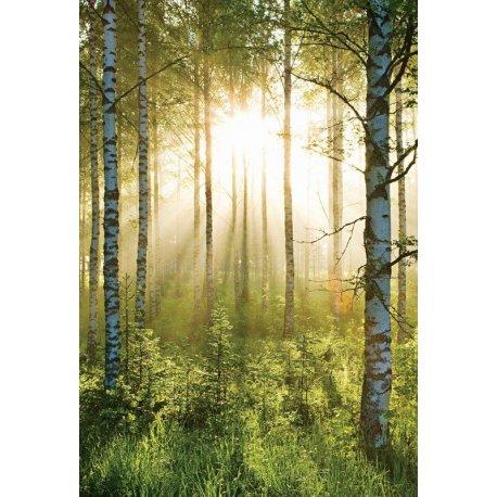 Amanhece no Bosque Verde