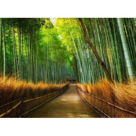 Senda em Bosque de Bambu