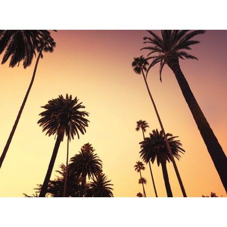 Silhuetas de Palmeiras Venice Beach