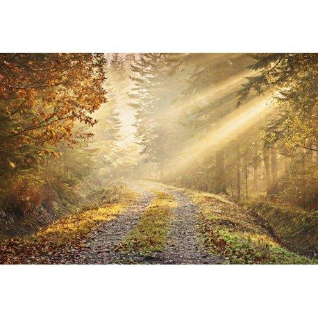 Caminho no Bosque de Outono