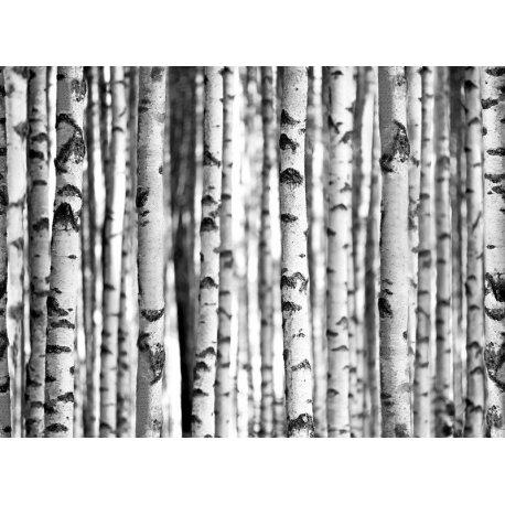 Mosaico de Troncos no Bosque