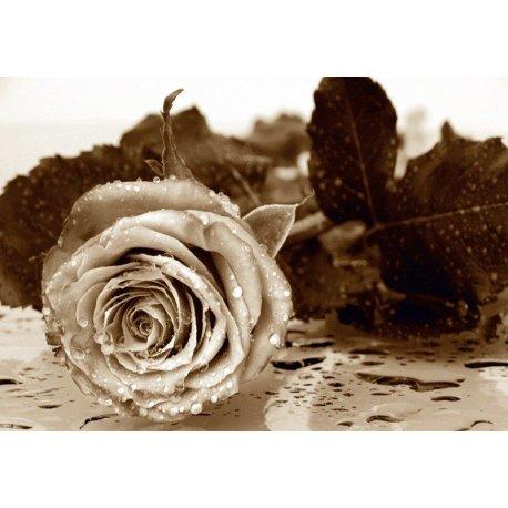 Rosa com Gotas de Água