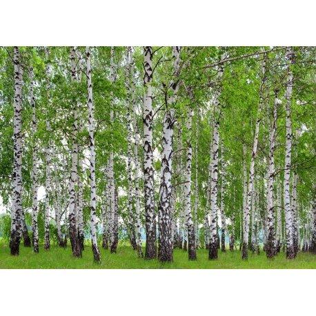 Muro de Árvores no Prado