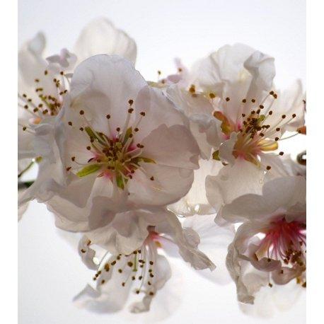 Flor Branca Iluminada