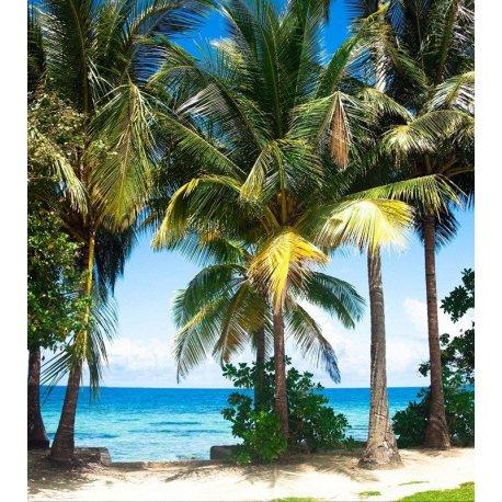 Praia de Palmeiras perto do Mar Azul