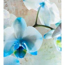 Tonos de Azul sobre Orquídea