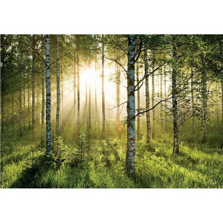 Bosque de Luz e Esperança