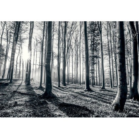 No Meio do Bosque Preto e Branco