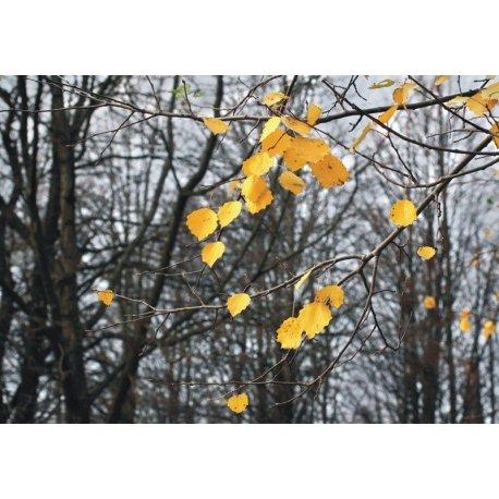 Contraste Outonal no Bosque