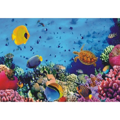 Fundo Marinho de Coral