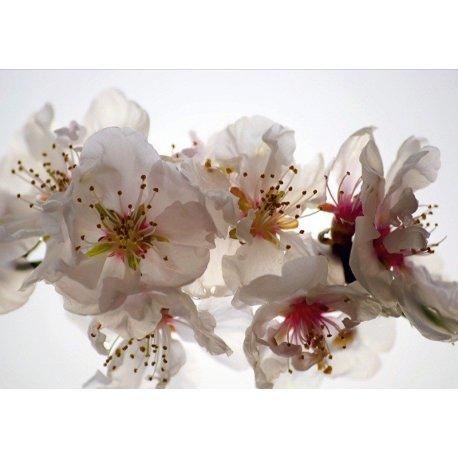 Fotografia Detalhe Flores Brancas