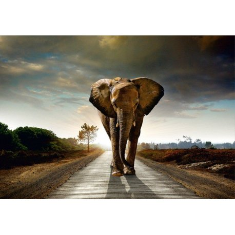 O Caminho dos Elefantes