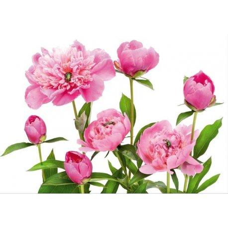 Decoração Flores Pétalas Rosas