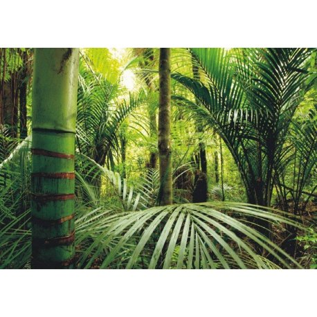 Mural no Meio da Selva Tropical