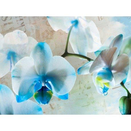 Doce Orquídea Branca e Azul