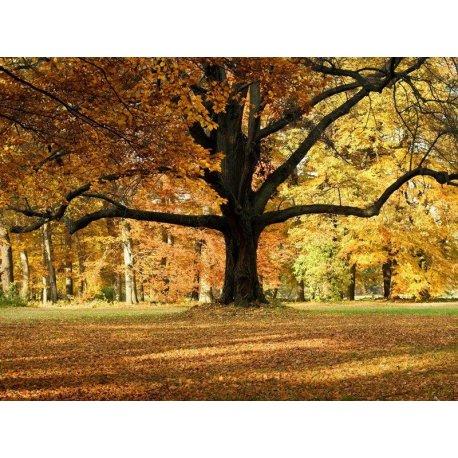 A Grande Árvore do Outono