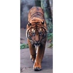 Tigre Avançando com Força