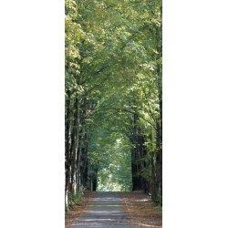 Passeio de Árvores Romântico