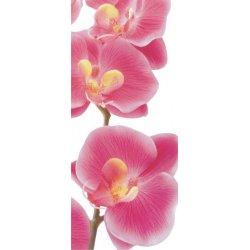Ramo de Orquídeas Rosas