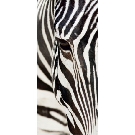 O Olhar da Zebra