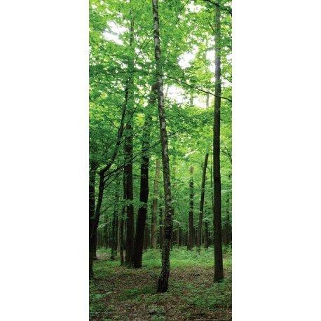 Entrada ao Bosque Assombrado