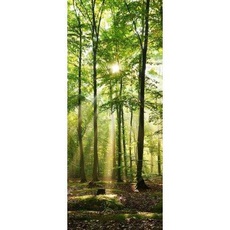 A Luz do Bosque Frondoso