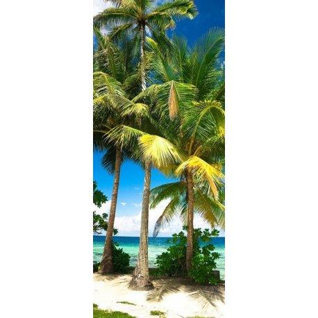 Palmeira na Praia das Caraíbas