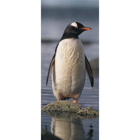 Pinguim na Costa