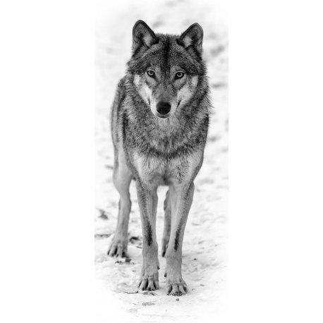 O Olhar do Lobo na Neve