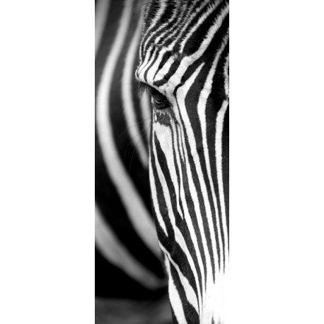 Primeiro Plano Zebra