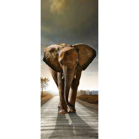O Olhar do Elefante Africano
