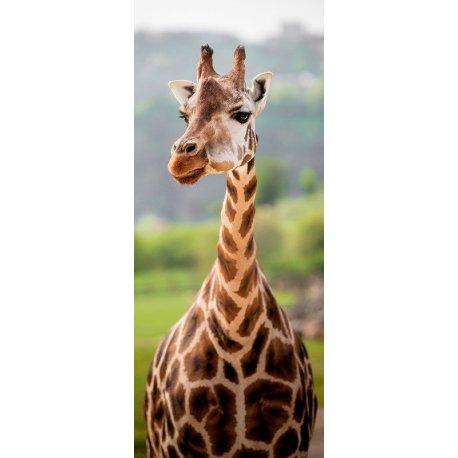 Face à Beleza da Girafa