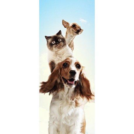 Cães e Gatos Amigos